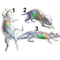 pet drug radiosynthesis